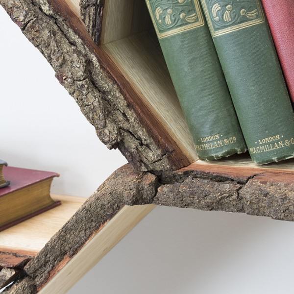 bark edge tree branch shelf