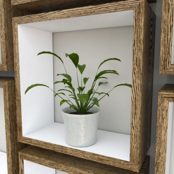 Square Shelves Cube shelves white painted dark oak cube shelf_Plant Shot Close